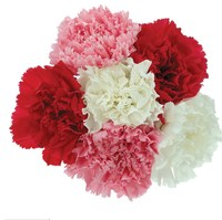 Carnation_Bouquet.jpg